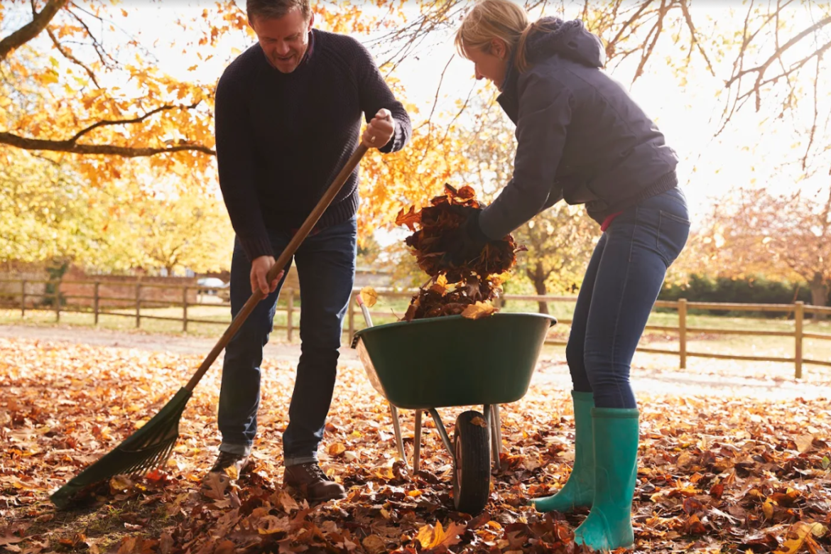 4 Tips To Keep Your Lawn Clear Of Leaves This Fall