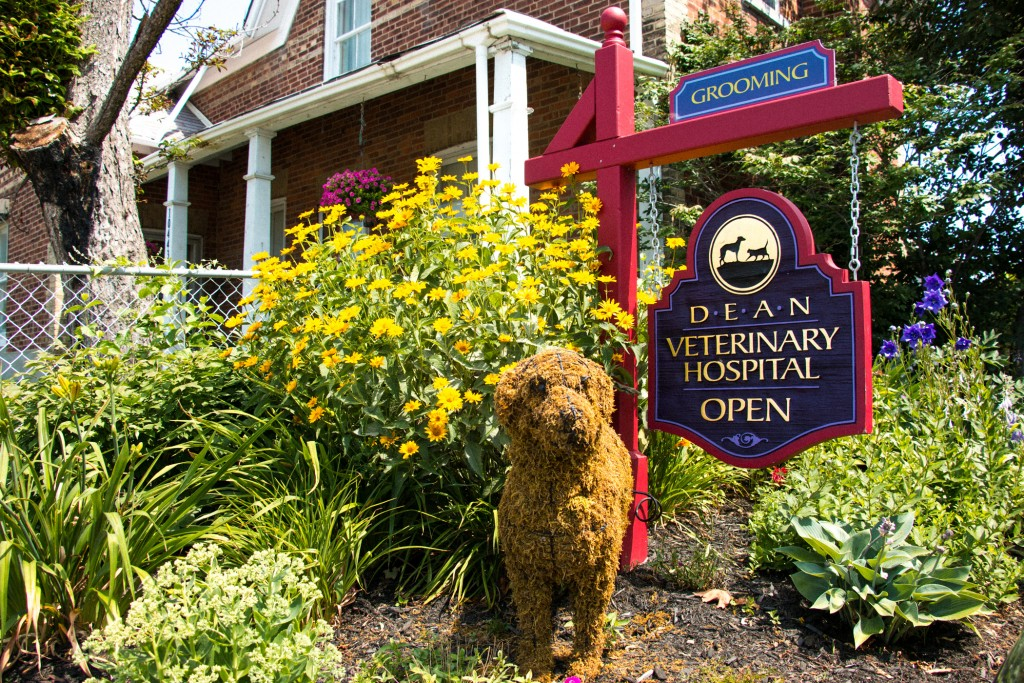 Places to Spoil Your Pet in Kleinburg